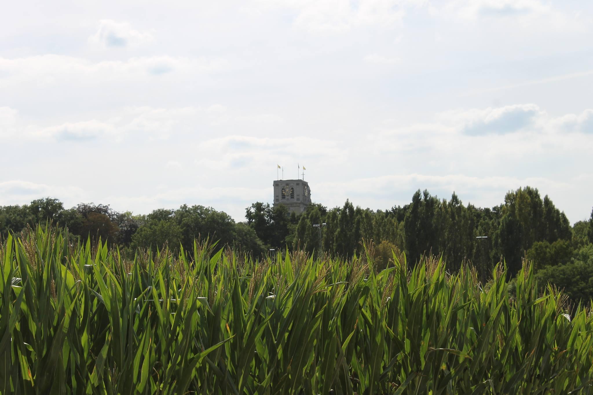 Dit is Belgisch - Basiliek van Scherpenheuvel