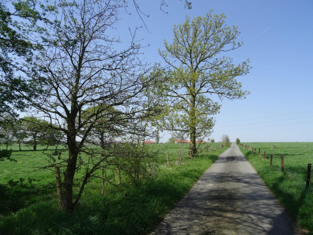De kikker wordt Prins - landelijke wegen