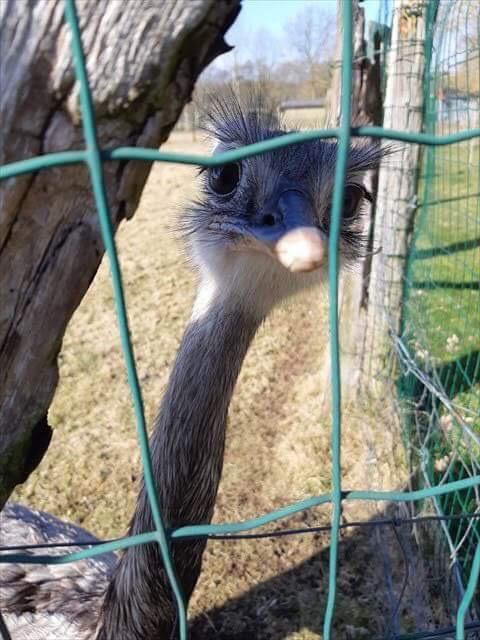 Onzentoer - Struisvogel