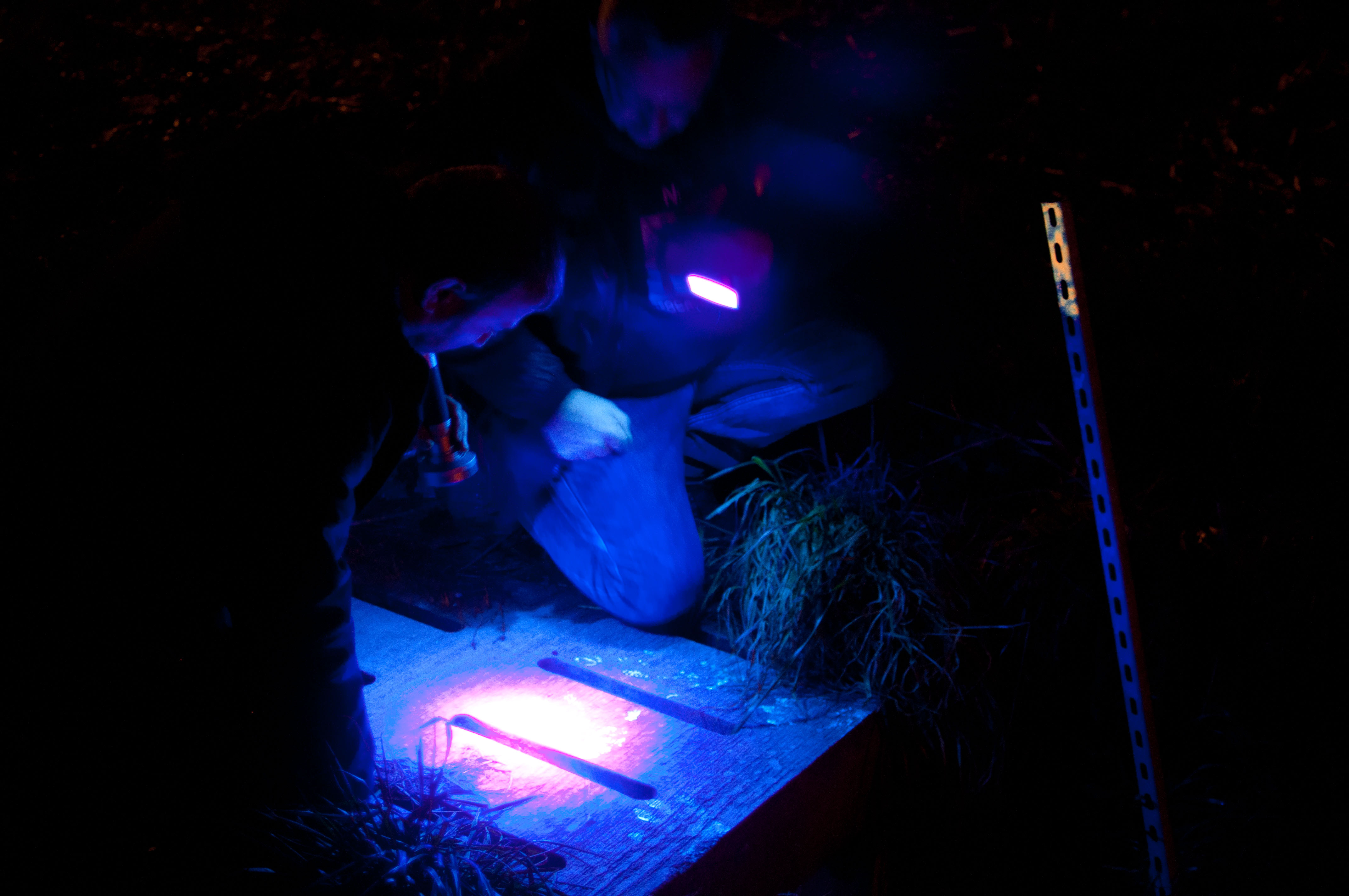 Fright Night - Nachtcaches UV licht