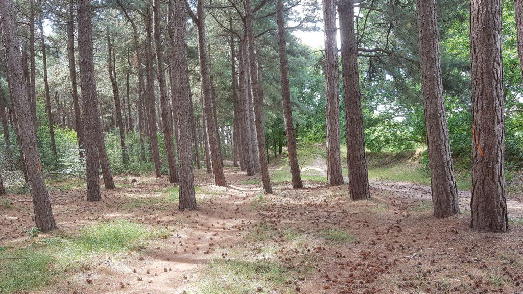 Bos aan De Mosten