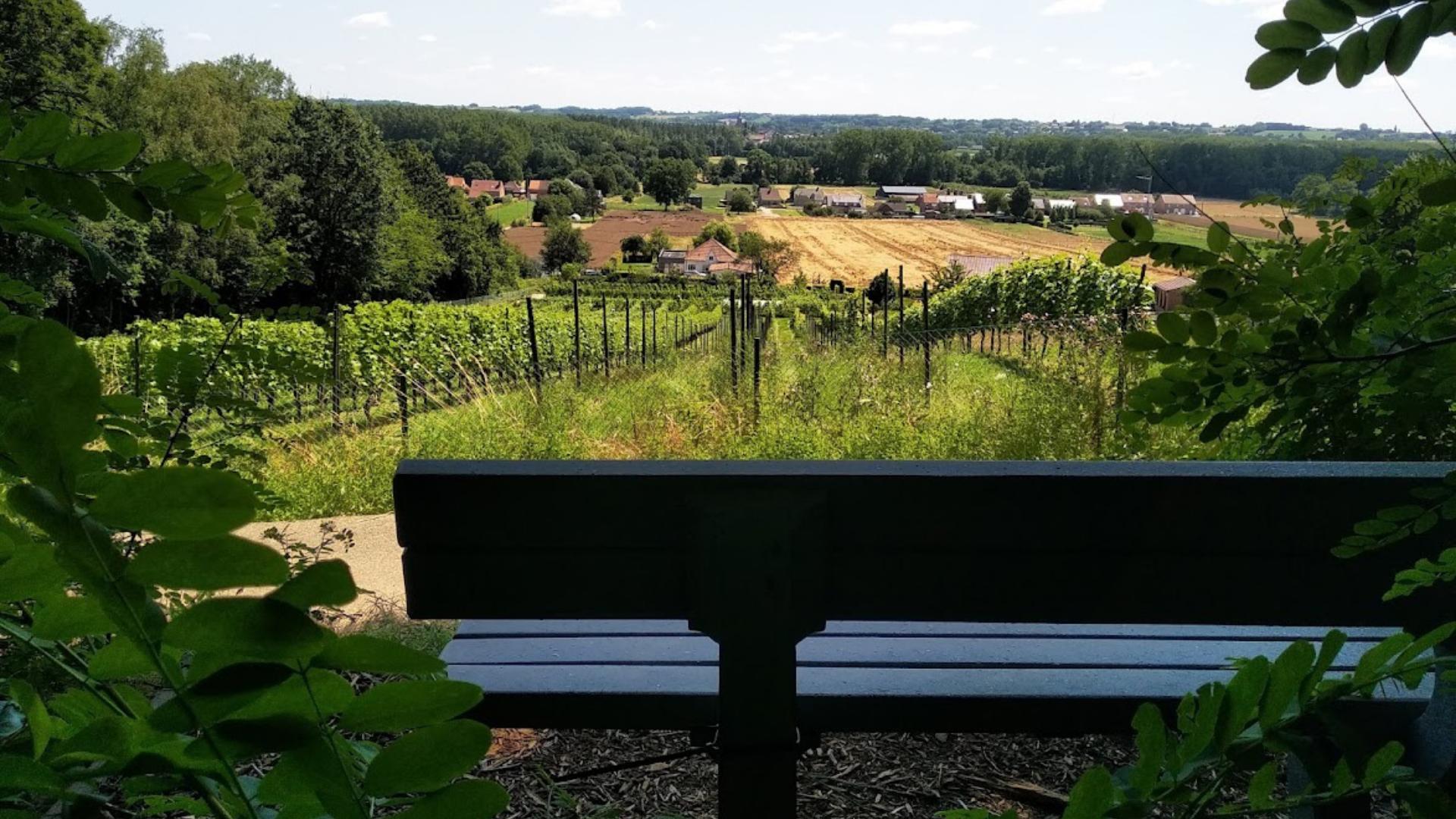 Wijndorp Houwaart - uitzicht wijngaarden